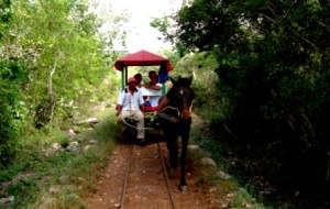 the buggy ride
