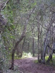 A jungle walk
